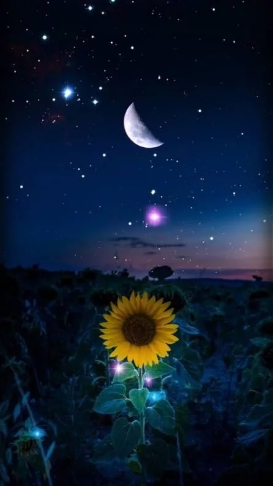 Image result for sunflower under the moon